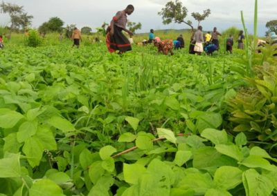 Orphans Helping to Weed the Soybeans to help mitigate food uncertainty