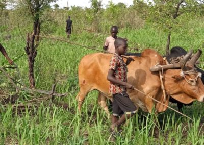 The First Year Children Plowing the Fields with Oxen to reduce food uncertainty